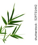 leaf of green bamboo isolated... | Shutterstock . vector #529731442