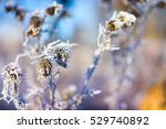 frozen thistle on the color... | Shutterstock . vector #529740892