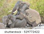 Elephants Mating In A Waterhol...