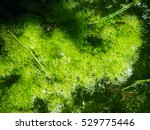 the polluted water were covered | Shutterstock . vector #529775446