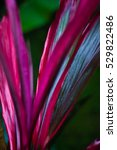 red petals   tropical exotic... | Shutterstock . vector #529822486