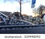 Frosty Winter Background Phot...