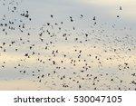 Wetlands Birds Flying In The...