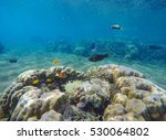 Underwater Landscape With...