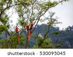 Macaw Birds In A Tree In The...