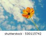 yellow flower on blue sky... | Shutterstock . vector #530115742