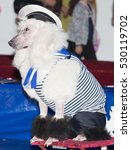 Small photo of dog acts in the circus