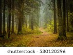 road in the autumn forest | Shutterstock . vector #530120296