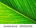 green color | Shutterstock . vector #530182336