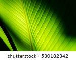 banana leaf | Shutterstock . vector #530182342