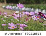 Background Nature Flowers At...