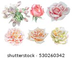 set with flowers. rose. peony....   Shutterstock . vector #530260342