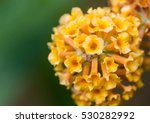 A Macro Shot Of A Yellow...