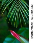 palm leaves    tropical exotic... | Shutterstock . vector #530285632