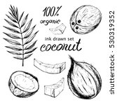 vector coconut collection . ink ... | Shutterstock .eps vector #530319352