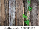 Wooden Fence With Green Leafy...