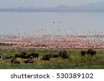 lake manyara flamingos in... | Shutterstock . vector #530389102