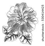 tropical exotic flower blossom. ... | Shutterstock . vector #530414425