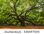 angle oak tree in johns island  ... | Shutterstock . vector #530497045