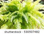 Green Fern Inthailand