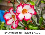 Small photo of Pink Addendum flower
