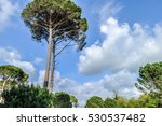 tall tree | Shutterstock . vector #530537482