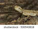 a close up of an agamous | Shutterstock . vector #530543818