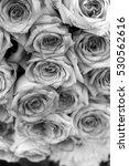 rose flower  b w  | Shutterstock . vector #530562616