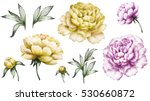 set vintage watercolor elements ... | Shutterstock . vector #530660872