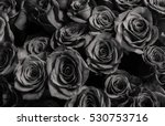 roses isolated on a black... | Shutterstock . vector #530753716