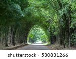 bamboo tunnel and road  | Shutterstock . vector #530831266