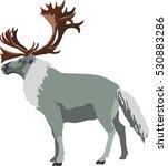 reindeer eps   Shutterstock .eps vector #530883286