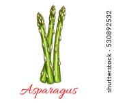 asparagus vegetable stem... | Shutterstock .eps vector #530892532