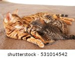Stock photo a cat with kittens 531014542