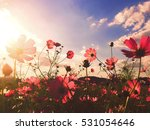flowers  cosmos  beautiful | Shutterstock . vector #531054646