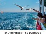 Seagull Feeding   Very Friendl...