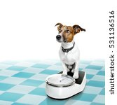 jack russell dog with guilty... | Shutterstock . vector #531136516