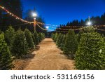 Christmas Tree Sale At Night.