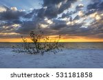 Mangrove Shrub Growing Out Of...
