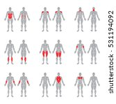 human muscles silhouettes... | Shutterstock .eps vector #531194092