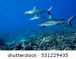 blacktip reef sharks ... | Shutterstock . vector #531229435