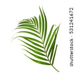 green palm leaf isolated on... | Shutterstock . vector #531241672