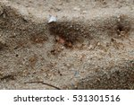 Small photo of Nest of ants, yellow ants in nest, colony of yellow ants