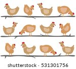 rhode island red chicken on... | Shutterstock .eps vector #531301756