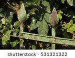 old weather beaten rrusty iron...   Shutterstock . vector #531321322