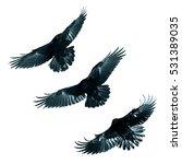 Birds   Mix Flying Common...