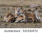 Double Cross Pride Lion Family...