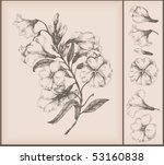 vintage flower drawing | Shutterstock .eps vector #53160838