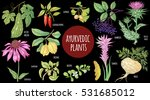 medical plant color isolated on ... | Shutterstock .eps vector #531685012