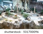 the chinese panda in the... | Shutterstock . vector #531700096